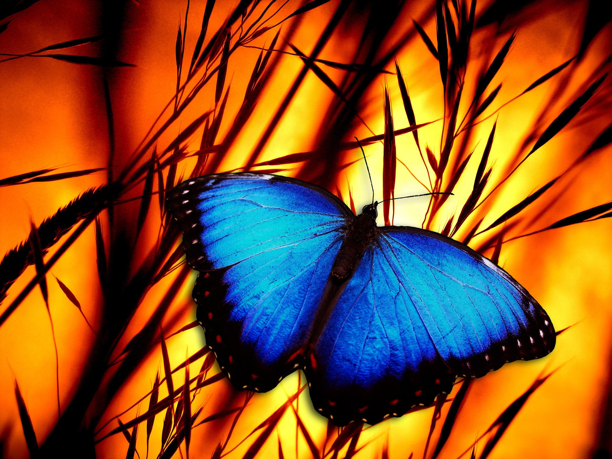 butterfly-370937